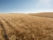 Saskatchewan Wheat Lands