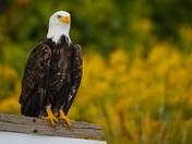 Eagle Moment