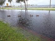 Sanford Riverwalk after Irma