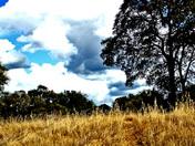 AUTUMN RIDGE GRASS