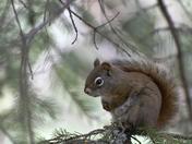 A Squirrel's World