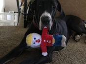 "Great Dane, ""Geoffrey"" with Mr. Bill"