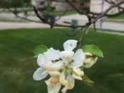 Spring Blossoms on Tree in September