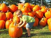 Local Pumpkin Fest at Shaw Farms