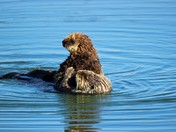 Otter cuteness overload