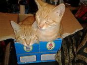 Spank  and Garfield