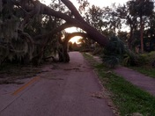 Natural tree archway