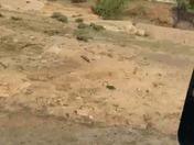 Raging arroyo in Cubero