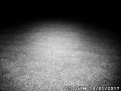trail cam