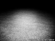 deer trail cam