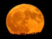 Beautiful Moon Rising