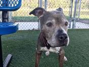 Lily, senior girl, calm, housetrained, HW neg!