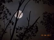 Moon Beamin