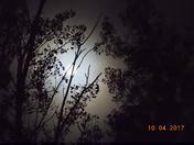 Fishing by moonlight.