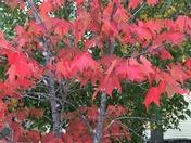Fall in NH