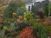 My garden.