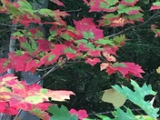 Red edged leaves