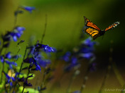 Float like a butterfly