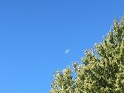 1/2 moon