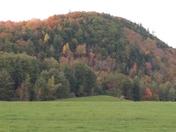 Vermont foliage