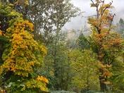 Mt. Finlayson fall.