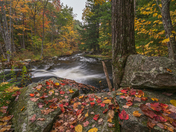 Stevens Brook Falls in the Fall.