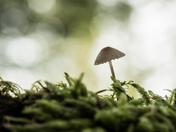 Mushroom (5116)