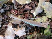 4 inch praying mantis