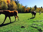 Fall fun with horses