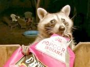 Rocky the Raccoon