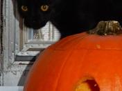 Halloween cat!