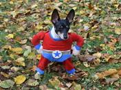 Dillon & Morgan's Halloween Costumes