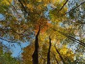 Autumn's Up