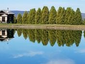 Mirror image Alyson's Orchard Walpole