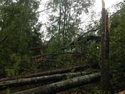 Post Storm Back Yard