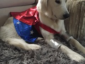 Wonder Dog (aka Wonder Woman)