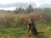 Wilson in the fall