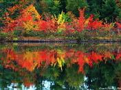 2017 Fall colors