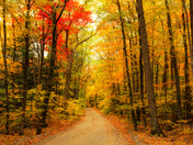 Country Road, New Hampshire Style