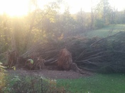 3 pines down from high winds