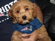 Teddy Loves The Patriots!!