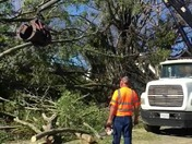 FEMA truck helps with tree removal in Wilkesboro