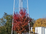 Autumn In Murray