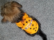 My dog Halloween outfit