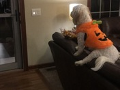 Wrigley patiently waiting for the trick or treaters!