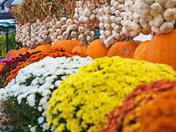 Colorful Halloween!