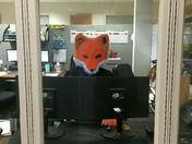 Fox At Work