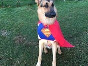 SuperDog Halloween Costume