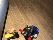 Taz the Taco & Pepper the Wonder Pup