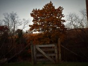 Few last shots of fall in Alleghany county